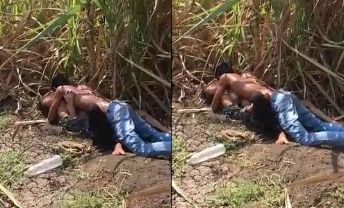 Indian couple having sex caught in khet